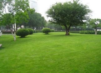 Tradycyjne koszenie trawy