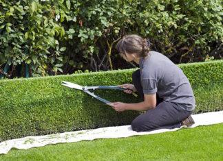 Prywatny ogród