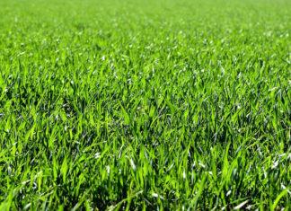 Robot koszący trawę - czy warto?