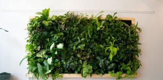 Jakie rośliny wybrać na zielone ściany